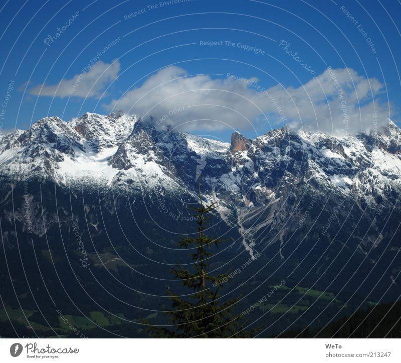 Alpenblick Umwelt Natur Landschaft Wolken Baum Berge u. Gebirge Österreich Schneebedeckte Gipfel August Sonnenlicht Panorama (Aussicht) monumental groß Sommer