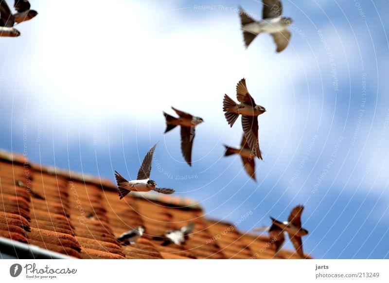 ..Aufbruch.. Natur Himmel Wolken Freiheit Luft Vogel fliegen frei Beginn Tiergruppe Dach Flügel Wildtier Schönes Wetter Anschnitt Bildausschnitt
