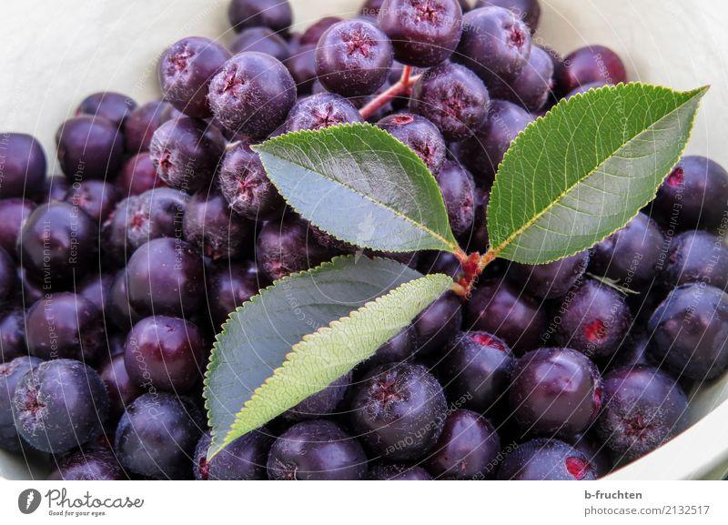 Aronia - Apfelbeere Lebensmittel Frucht Bioprodukte Vegetarische Ernährung Sommer kaufen Gesundheit blau violett apfelbeere aronia Blatt Schalen & Schüsseln