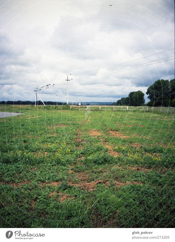 """Doc #Crows Natur Landschaft Pflanze Wolkenloser Himmel Gewitterwolken Horizont Sommer Klima Schönes Wetter Wind Wildpflanze """"Vogel Fliege Krähenkrähen,"""""""