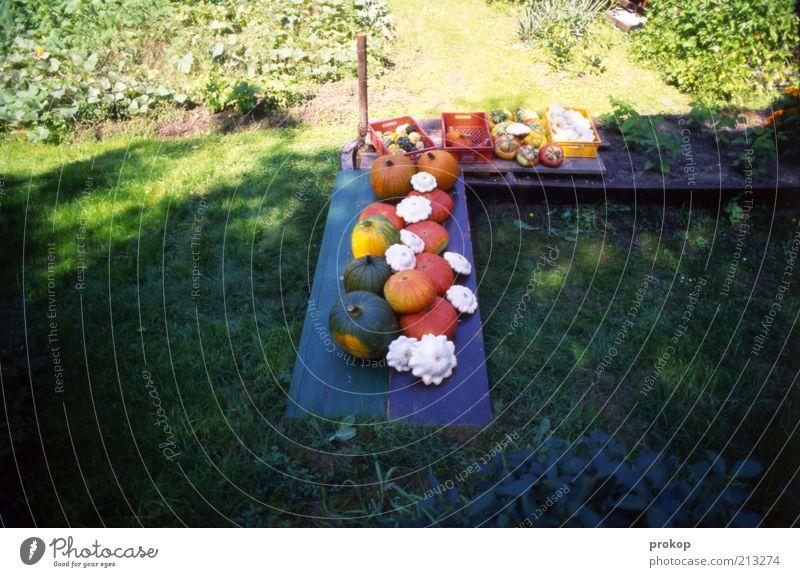 Das Gemüse im Schatten halten Lebensmittel Frucht Bioprodukte Vegetarische Ernährung Natur Pflanze Schönes Wetter Gras Garten Duft frisch Gesundheit natürlich