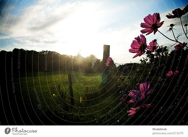 Sommerblumen Natur schön Sonne grün blau Pflanze Wiese Blüte Gras Garten träumen Landschaft hell Umwelt violett