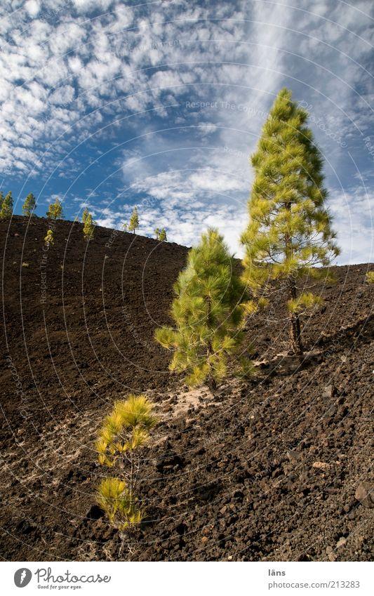 Siedler Himmel Pflanze Wolken Berge u. Gebirge Luft Erde Wachstum außergewöhnlich Urelemente Surrealismus seltsam Blauer Himmel Stil Vulkan Kiefer Baum