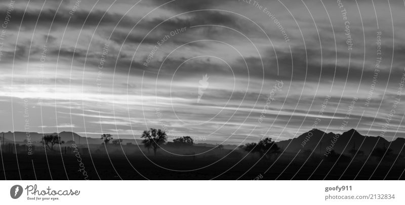 Früh morgens in Namibia's Wüste Ferien & Urlaub & Reisen Tourismus Ausflug Abenteuer Ferne Freiheit Safari Sommer Umwelt Natur Landschaft Himmel Wolken Nebel