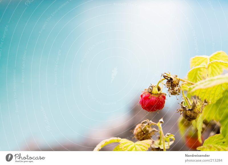 Früchtchen Natur grün blau Pflanze rot Sommer Ernährung Herbst Stimmung Lebensmittel Frucht ästhetisch Wachstum Sträucher rein