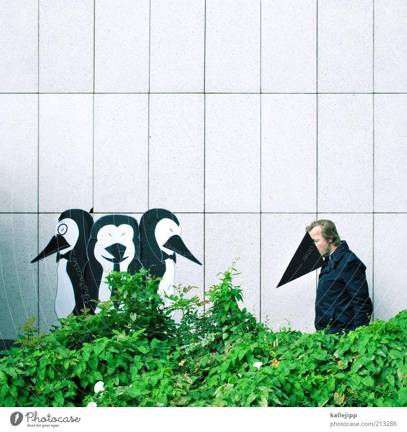 ausländer Lifestyle Mensch maskulin Mann Erwachsene 1 30-45 Jahre Tier Vogel Tiergruppe Gefühle Pinguin fremd Integration Hecke Wand Humor Problematik Netzwerk