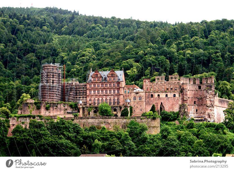 Heidelbergs ganzer Stolz Freizeit & Hobby Tourismus Sightseeing Städtereise Umwelt Natur Schönes Wetter Wald Burg oder Schloss Bauwerk Stein Farbfoto