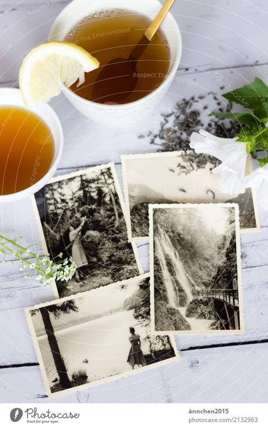 Erinnerungen Tee trinken erinnern alt Senior früher Fotografie Großmutter Großvater Großeltern schwarz weiß hell Erholung Vergangenheit grün Blüte loser Tee