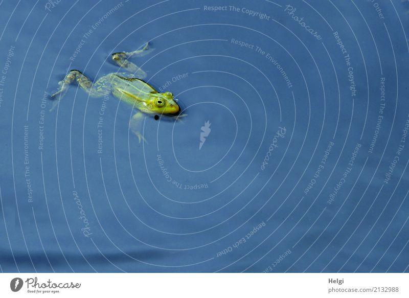 ganz entspannt Natur blau Sommer grün Wasser Einsamkeit Tier ruhig Umwelt natürlich klein Zufriedenheit ästhetisch Wildtier genießen Schönes Wetter