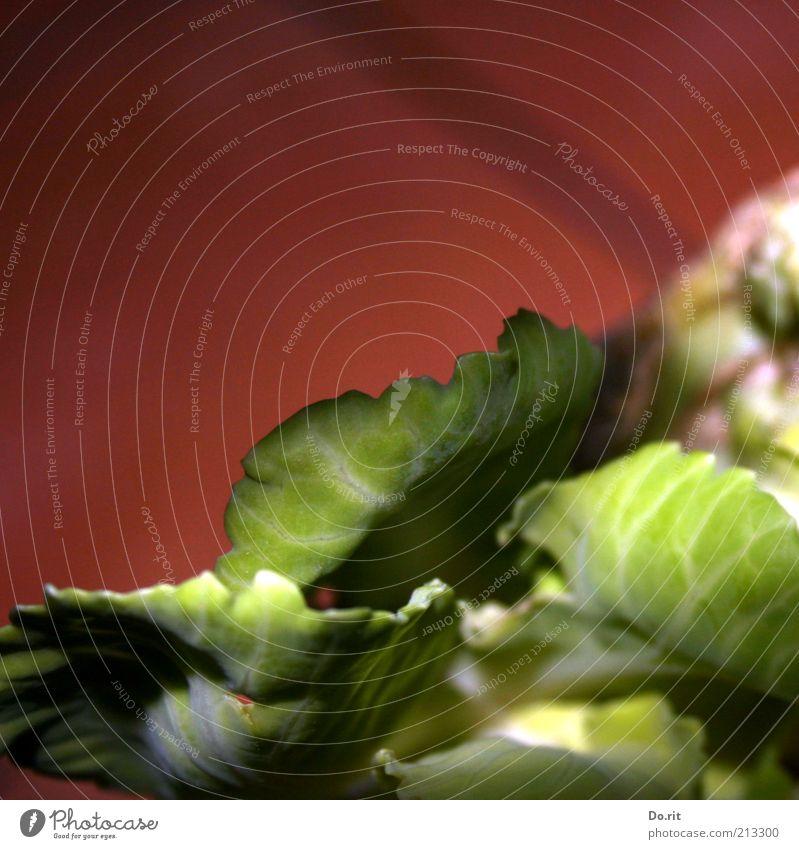 """Kohl war... Lebensmittel Gemüse Salat Salatbeilage Weißkohl Kohlgewächse Ernährung Bioprodukte Vegetarische Ernährung Diät Fressen füttern grün rot knackig"