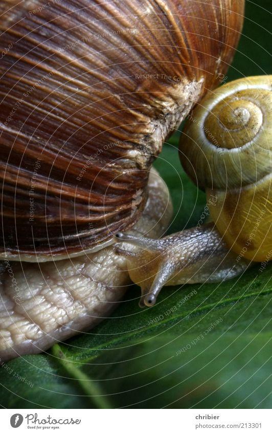 Booah!! DU bist aber groß! Natur grün Blatt Tier gelb Freundschaft braun Zusammensein Kraft warten klein nah Schutz Kontakt Neugier