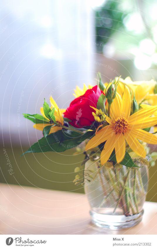 1000 mal Fräulein X Häusliches Leben Dekoration & Verzierung Sommer Blume Blüte Fenster Blühend Duft verblüht hell Farbe Leichtigkeit Rose Blumenstrauß Vase