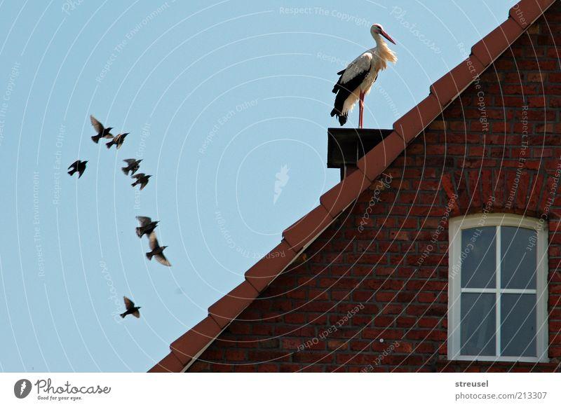 Nachwuchs erwartet? Glück Dach Umwelt Tier Wolkenloser Himmel Schönes Wetter Wildtier Vogel Storch 1 Schwarm Backstein fliegen sitzen Häusliches Leben natürlich