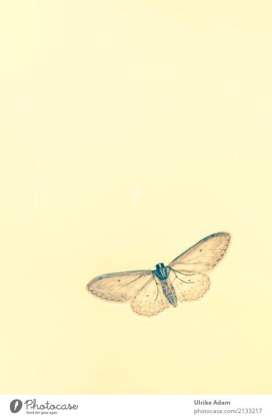 Falter Natur Tier Garten Wildtier Schmetterling Tiergesicht Flügel Motte Insekt 1 fliegen sitzen außergewöhnlich natürlich wild braun gelb grau Tierliebe