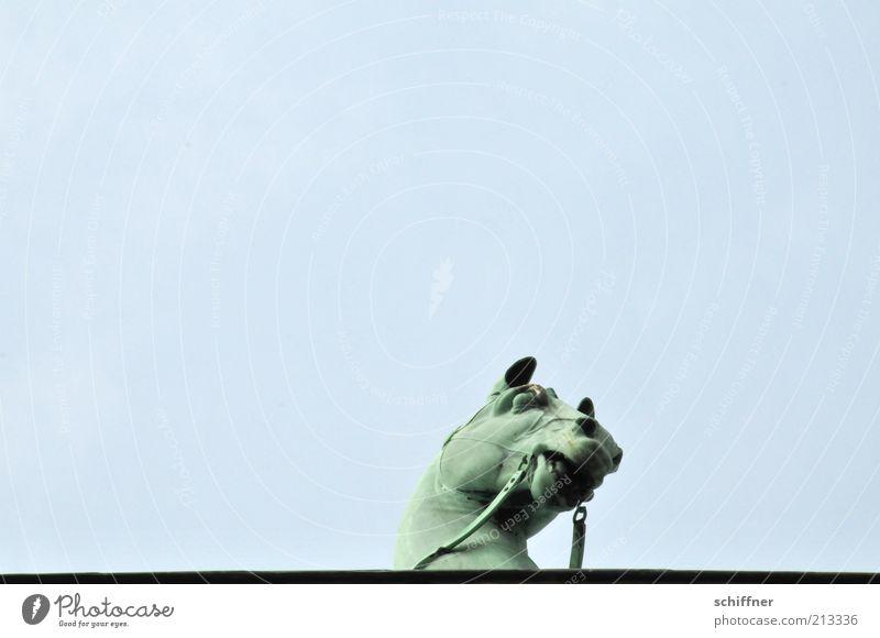 Tellerrandgucker IV Himmel Tier hoch ästhetisch Pferd Neugier einzeln Denkmal Wahrzeichen Skulptur Sehenswürdigkeit Quadriga Pferdekopf Brandenburger Tor