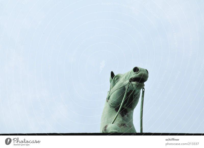 Tellerrandgucker III Himmel Tier hoch ästhetisch Pferd Neugier einzeln Denkmal Wahrzeichen Skulptur Sehenswürdigkeit Quadriga Pferdekopf Brandenburger Tor