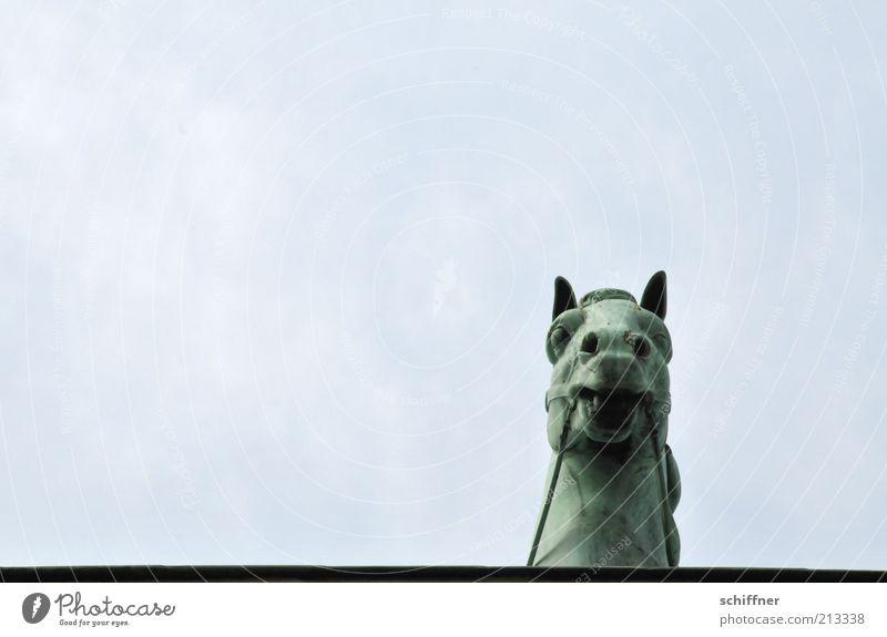 Tellerrandgucker II Himmel Tier hoch ästhetisch Pferd Neugier einzeln Denkmal Wahrzeichen Skulptur Sehenswürdigkeit Quadriga Pferdekopf Brandenburger Tor