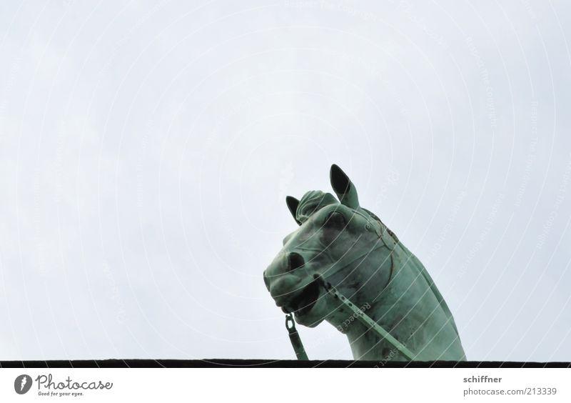 Tellerrandgucker I Himmel Tier hoch ästhetisch Pferd Neugier einzeln Denkmal Wahrzeichen Skulptur Sehenswürdigkeit Kunst Quadriga Pferdekopf Brandenburger Tor