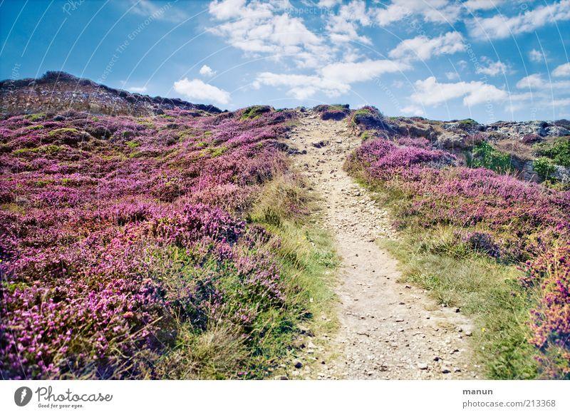 *600* ... und weiter geht's! Natur Pflanze Sommer Ferien & Urlaub & Reisen Wolken Gras Berge u. Gebirge Wege & Pfade Sand Landschaft Umwelt Horizont Felsen Erde