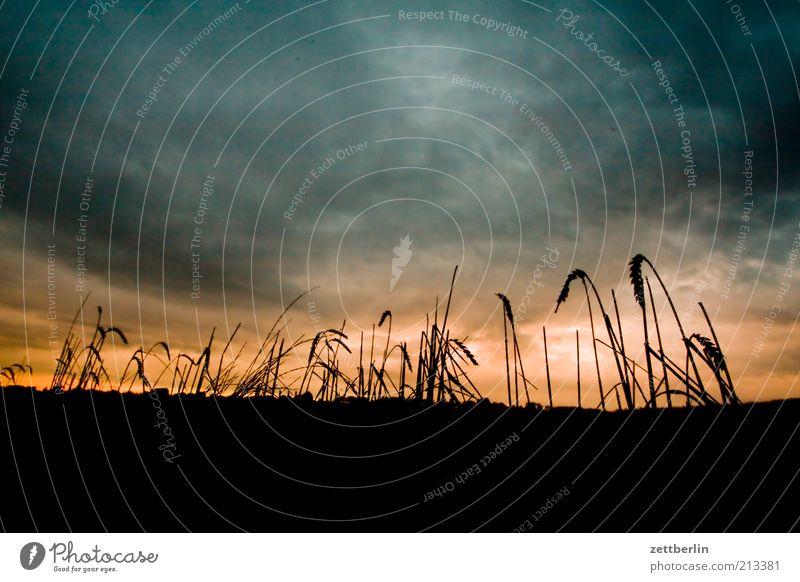 Middelhagen Himmel Natur Ferien & Urlaub & Reisen Wolken Landschaft Gras Feld Sehnsucht Getreide Landwirtschaft Sonnenaufgang Fernweh Abenddämmerung dramatisch Mecklenburg-Vorpommern August