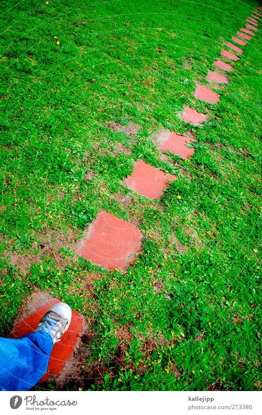 fort-schritt Mensch Ferne Wiese Umwelt Wege & Pfade Beine Fuß gehen laufen wandern planen Zukunft Bildung Ziel Spaziergang Spuren