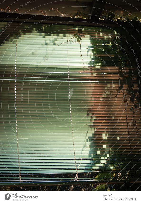 Hinter den Lamellen Sträucher Efeu Jalousie Lamellenjalousie Kunststoff Schutz Farbfoto Außenaufnahme Detailaufnahme Muster Strukturen & Formen