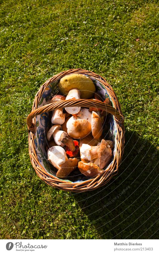 Pilzkorb Lebensmittel Gemüse Ernährung Umwelt Natur ästhetisch Korb Steinpilze Hallimasch Ernte Sammlung Farbfoto Außenaufnahme Menschenleer Textfreiraum oben