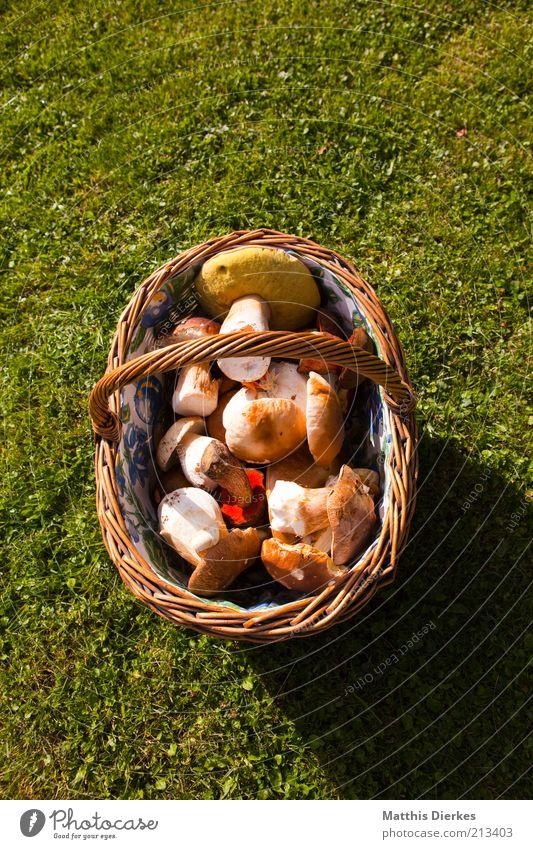 Pilzkorb Natur Umwelt Lebensmittel frisch Ernährung ästhetisch Gesunde Ernährung Rasen Gemüse Ernte Sammlung Pilz Korb Vegetarische Ernährung Foodfotografie Produkt