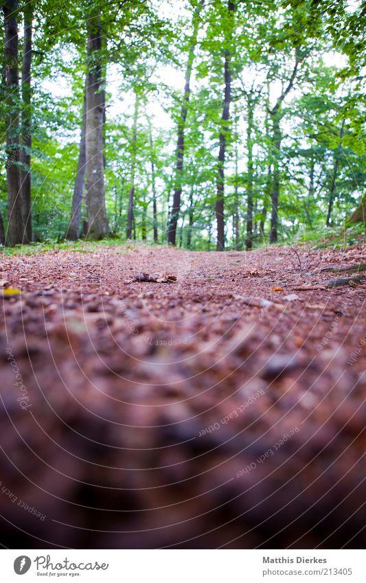 Wald Natur Baum Sommer Blatt grau Wege & Pfade Umwelt ästhetisch weich Klima wild Fußweg Baumstamm Moos Schönes Wetter