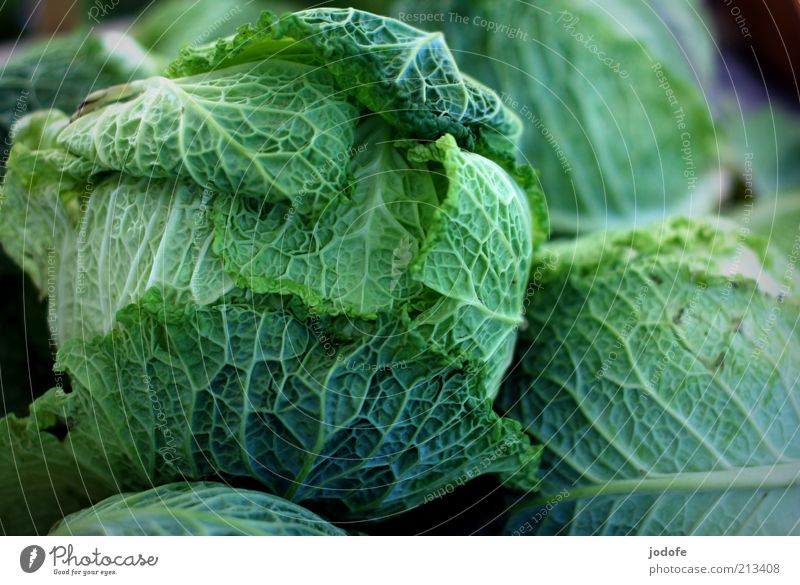Wirsing Lebensmittel Gemüse grün Kohl Vegetarische Ernährung pflanzlich Kohlgewächse mehrere Farbfoto mehrfarbig Außenaufnahme Menschenleer Tag Licht Schatten