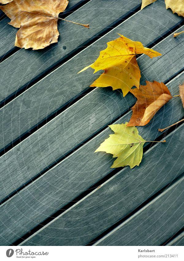 l'automne. Natur Blatt Farbe Herbst Linie Umwelt Boden Wandel & Veränderung Vogelperspektive Vergänglichkeit Verfall Holzbrett Anschnitt Bildausschnitt Holzfußboden