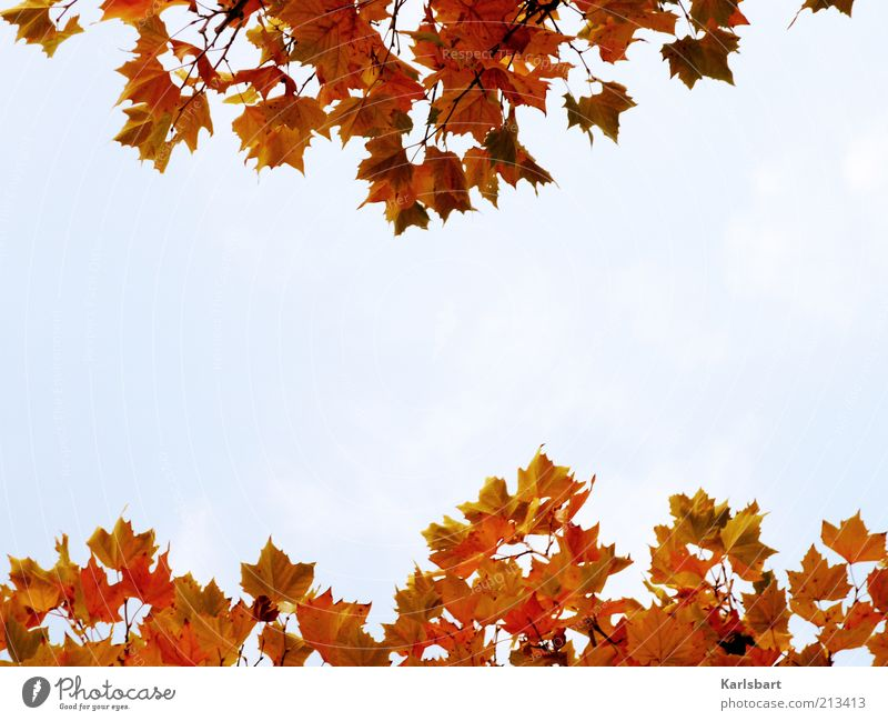 bloody mary Himmel Natur Farbe Baum Erholung Blatt Freude Umwelt Herbst Stil Gesundheit Lifestyle Freiheit Idylle Wandel & Veränderung harmonisch