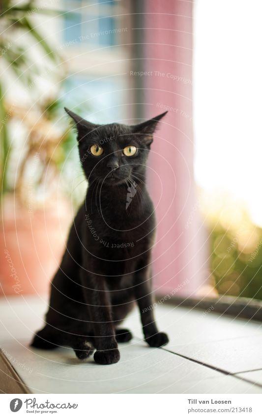 Black Cat weiß grün Pflanze schwarz Haus Tier Katze rosa dünn Fell Fliesen u. Kacheln Haustier Sympathie schwarzhaarig Grünpflanze Gefühle