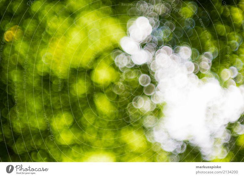 Blätter Swirly Bokeh Natur Ferien & Urlaub & Reisen Pflanze grün Sonne Baum Blatt Ferne Wald Umwelt Bewegung Stil Kunst Ausflug wild Wachstum
