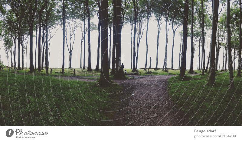 Walden I Mensch Ferien & Urlaub & Reisen Baum Erholung ruhig Ferne Reisefotografie Leben Gras Freiheit Tourismus Freizeit & Hobby Ausflug Zufriedenheit wandern