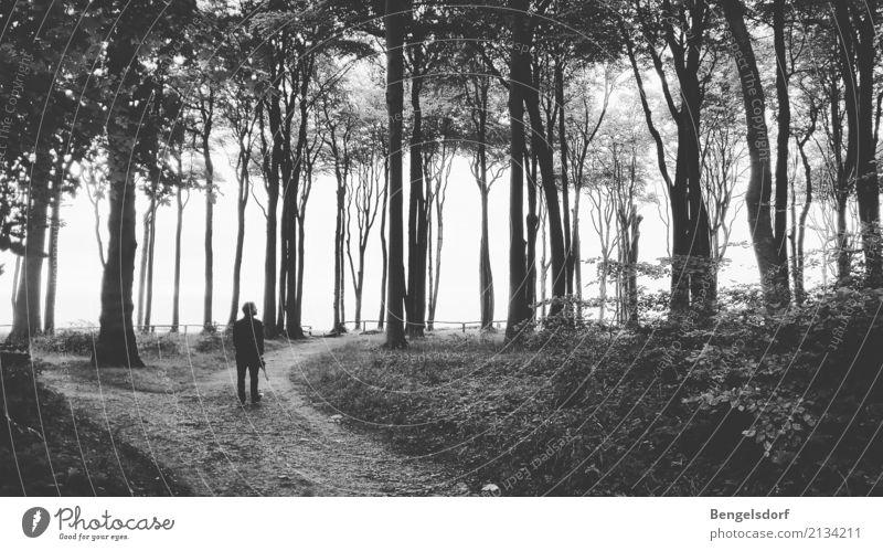 Gespensterwald Mensch Ferien & Urlaub & Reisen Mann Sommer Baum Erholung Einsamkeit ruhig Ferne Wald Erwachsene Leben Traurigkeit Tourismus Freizeit & Hobby