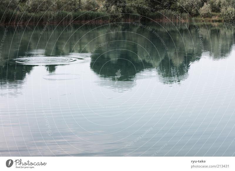 Ruhepunkt harmonisch Zufriedenheit Erholung ruhig Natur Landschaft Pflanze Wasser Sommer Baum Sträucher Seeufer träumen verbreiten Vergänglichkeit Wasserkreis