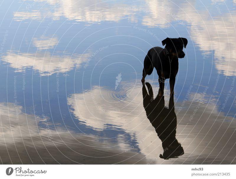auf den hund gekommen Natur schön Himmel ruhig Wolken Einsamkeit Tier Hund See Luft warten Wachsamkeit Schönes Wetter Licht Wasseroberfläche