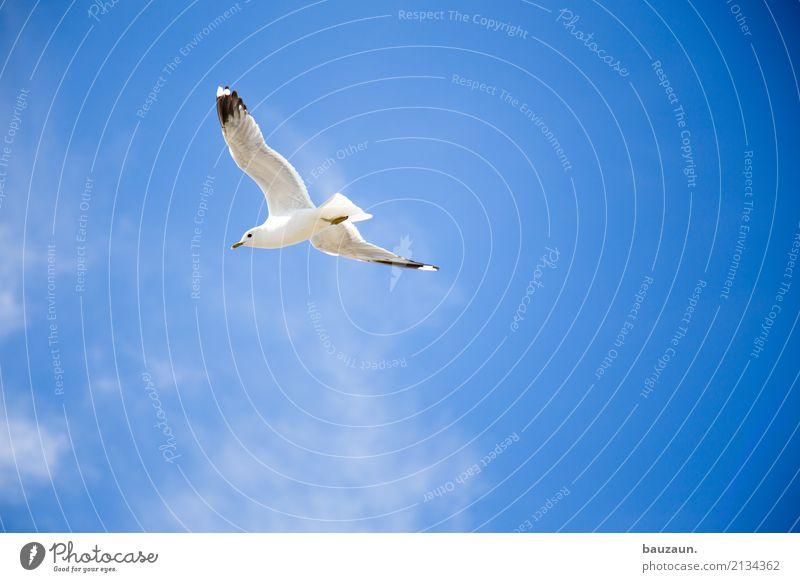 flugmöwe. sportlich Fitness Ferien & Urlaub & Reisen Abenteuer Ferne Freiheit Sommer Sonne Umwelt Natur Himmel Wolken Schönes Wetter Tier Vogel Möwe 1 fliegen
