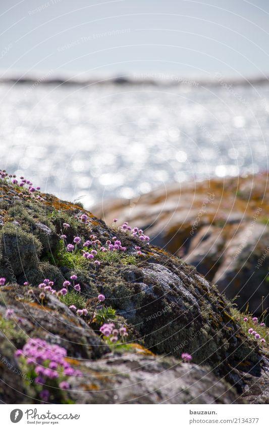 noch mehr blümchen. Ferien & Urlaub & Reisen Tourismus Sommer Meer Umwelt Landschaft Pflanze Himmel Klima Wetter Schönes Wetter Blume Gras Moos Blüte Felsen