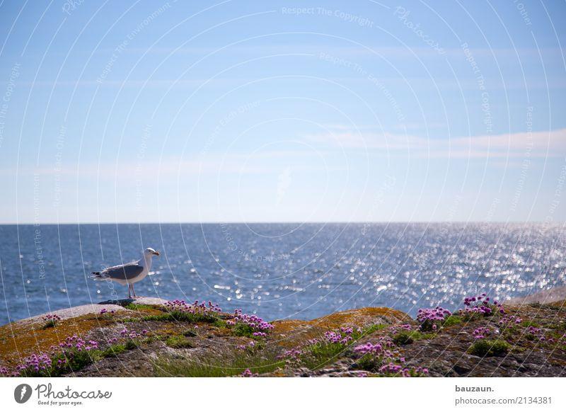 blümchen mit möwe. Ferien & Urlaub & Reisen Tourismus Ausflug Ferne Freiheit Sommer Meer Insel Wellen Umwelt Natur Landschaft Klima Wetter Schönes Wetter Blume