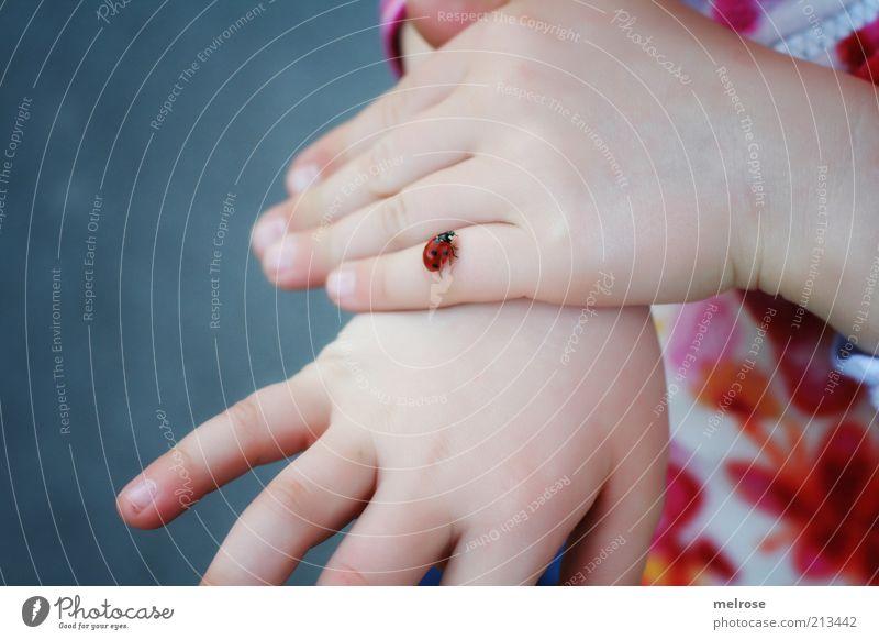 Mein kleiner Kribbel Krabbel - Freund Natur Hand weiß Mädchen rot Tier Freiheit Gefühle Bewegung Glück Frühling Zufriedenheit Zusammensein Finger Kindheit