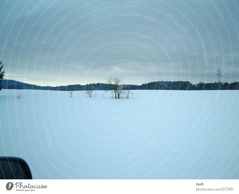 erster Schnee Ebene Sträucher Winter kalt Wald Landschaft