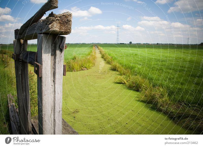 Green Highway Umwelt Natur Landschaft Pflanze Urelemente Luft Wasser Himmel Wolken Horizont Schönes Wetter Gras Grünpflanze Wasserpflanze Algen Wiese Feld