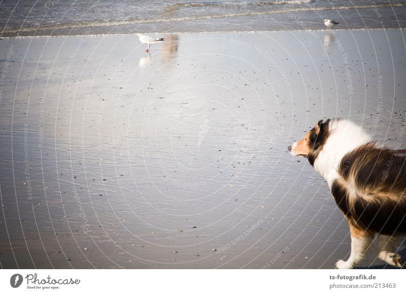 2 in 1: Lassie + Vom Winde verweht Natur Wasser Sommer Strand Ferien & Urlaub & Reisen Meer Tier Umwelt Sand Hund Küste Wetter Wellen Vogel Wildtier