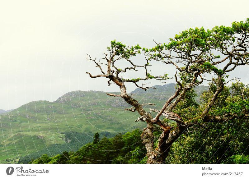 Lieblingsort Umwelt Natur Landschaft Pflanze Baum Ast Zweig Hügel Wachstum natürlich grün bizarr Idylle Umweltschutz Vergänglichkeit Zeit gedeihen Farbfoto