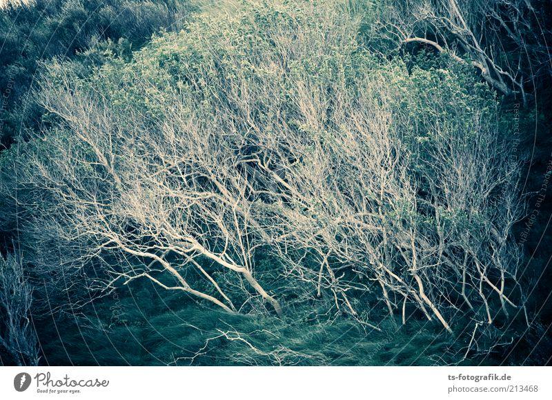 """Das Gebüsch der """"Ritter vom Nie"""" Natur Landschaft Pflanze schlechtes Wetter Wind Sturm Gewitter Gras Sträucher Grünpflanze Wildpflanze Wachstum dunkel exotisch"""