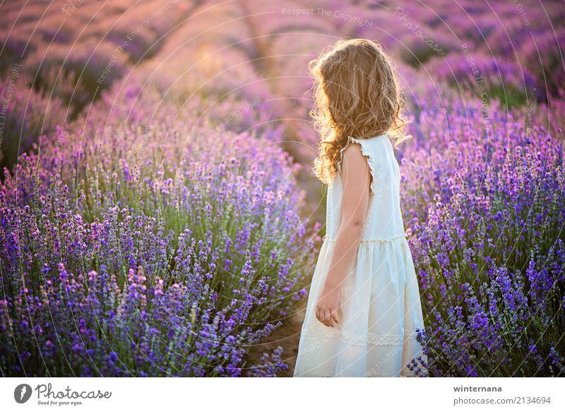 Lavendel goldenes Licht abgelegt Mädchen 1 Mensch 3-8 Jahre Kind Kindheit Umwelt Sonnenlicht Sommer Feld Kleid blond Locken Blick stehen träumen warten