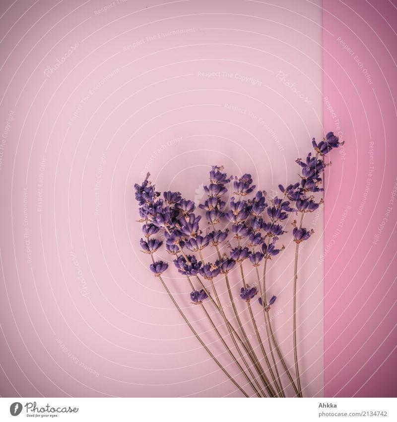 Duftstrauß Pflanze Farbe schön Liebe Hintergrundbild rosa Blühend Lebensfreude Romantik violett Blumenstrauß Kitsch harmonisch Leidenschaft Verliebtheit