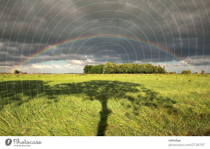 Regenbogen- und Baumschatten auf grüner Wiese Natur Landschaft Himmel Wolken Sommer Wetter Schönes Wetter Unwetter Gras Feld farbenfroh Weide ländlich Grasland